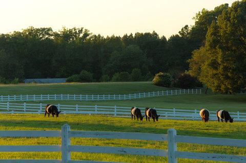 Farm Setting
