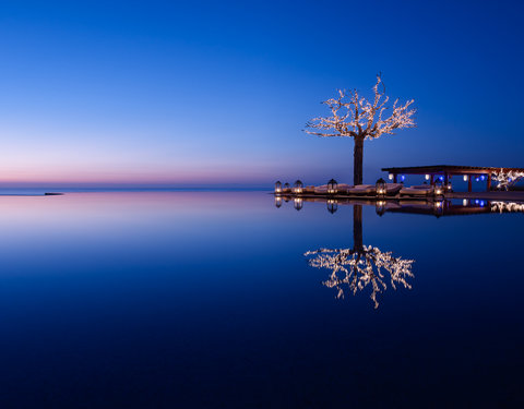 Infinity Pool - Tree reflection