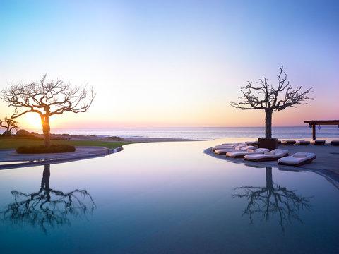 Infinity Pool - two trees