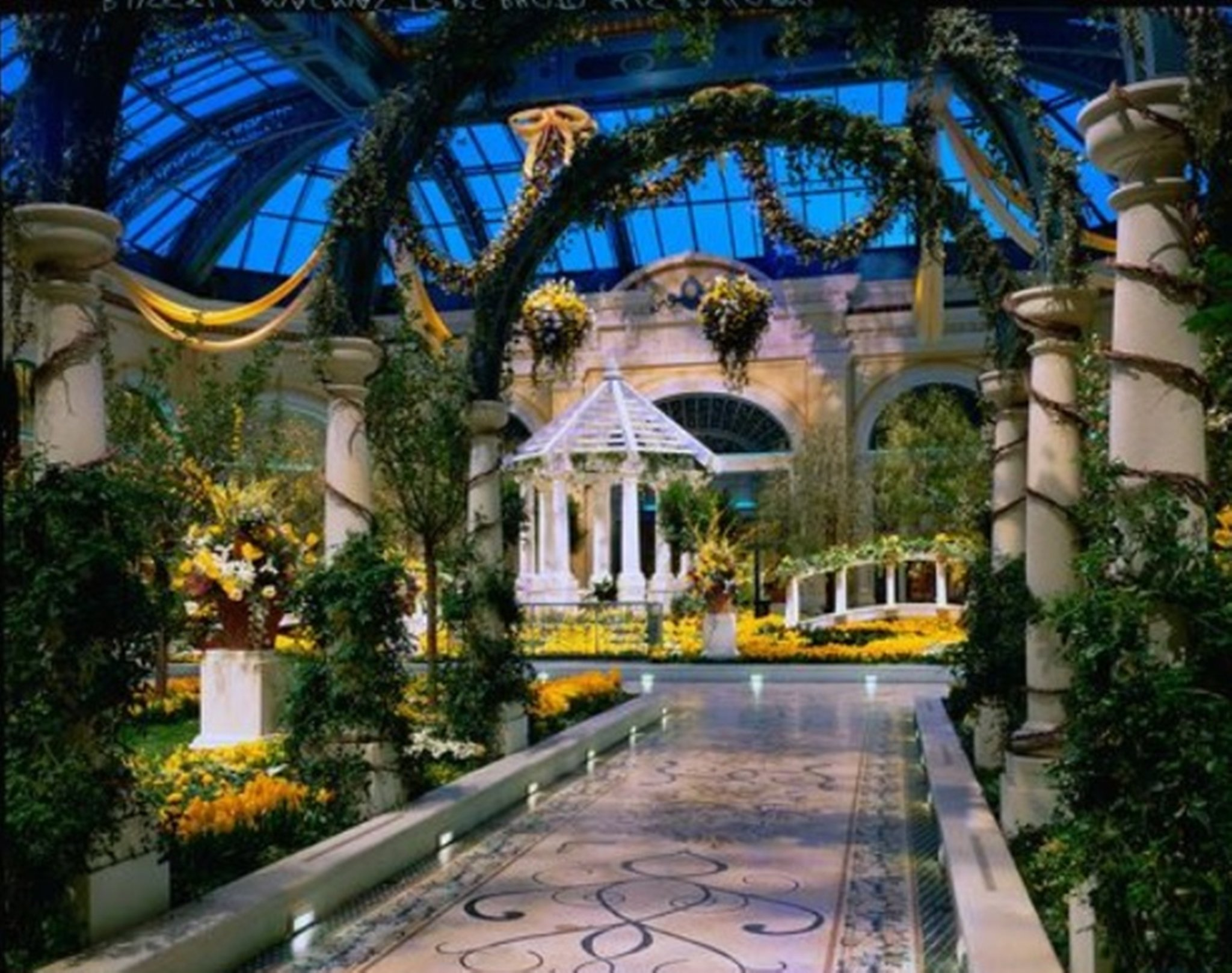 Bellagio Conservatory Yellow Flowers S